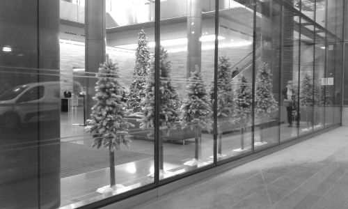 Christmas trees in window of office building