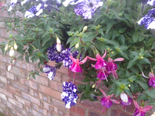 Hanging basket with petunias and fuschias