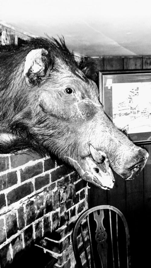 A boar's head on the wall of The Boar's Head Inn